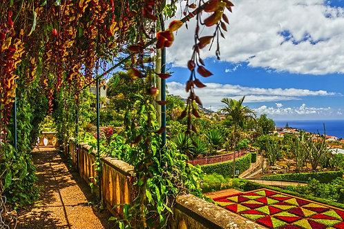 Фотообои. Фрески. Картины. Ботанический сад. Монте. Португалия. Природа. Пейзаж