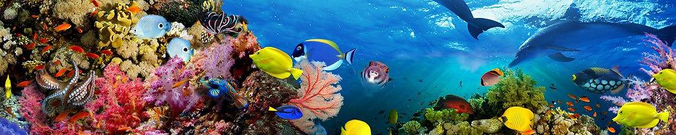 Подводная панорама моря