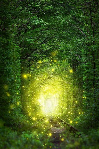 Зеленый тоннель в волшебном лесу