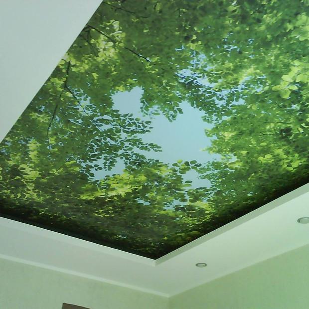 stretch-ceilings-photo-printing-leaves.j