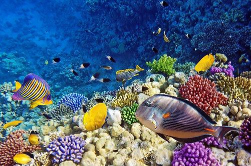 Кораллы и рыбы в Красном море Египта