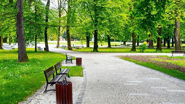Фотообои. Фрески. Картины. Городской парк. Скамейки. Природа и пейзажи