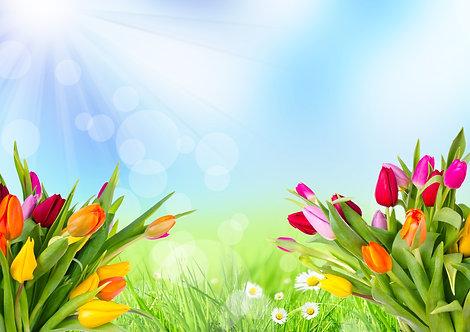 Весенний луг с разноцвеными тюльпанами на фоне солнечного неба