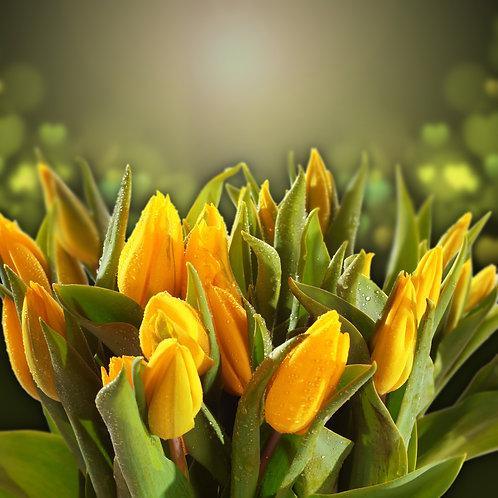 Желтые тюльпаны с каплями воды на зеленом размытом фоне