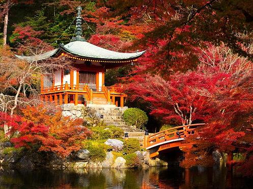 Фотообои. Фрески. Картины. Японский сад осенью. Храм Дайго-дзи. Киото. Япония