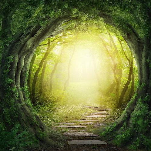 Волшебный темный лес и тропа