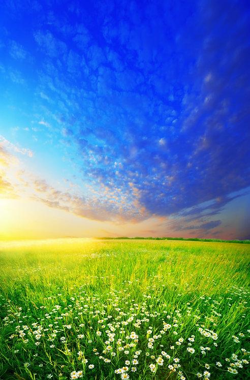 Пейзаж с ромашками и закатом
