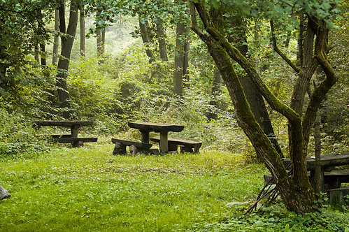 Фотообои. Фрески. Картины. Парк. Деревья. Летний лес. Природа