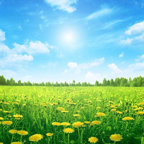Желтые одуванчики на зеленом лугу под голубым небом