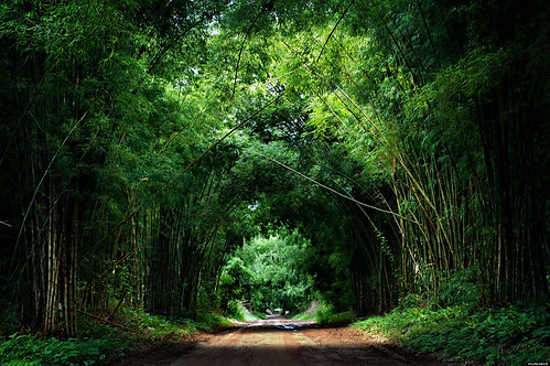 Дорога через бамбуковый лес