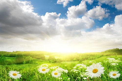 Цветочное поле с ромашками и голубое солнечное небо