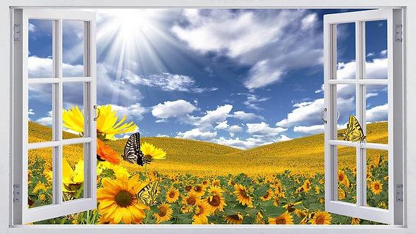 Вид из открытого окна на поле с подсолнухами и бабочками