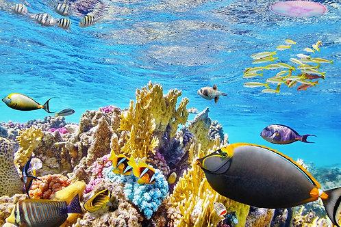 Живописный подводный мир с кораллами и тропическими рыбами