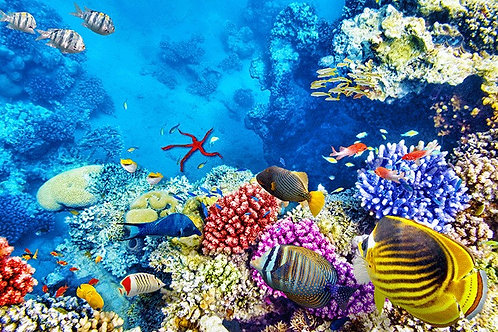 Восхитительный подводный мир с тропическими рыбами и кораллами