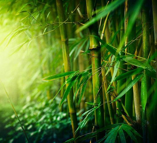 Заросли бамбукового леса крупным планом