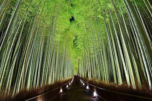 Тропа с фонариками в зарослях бамбукового леса - Киото - Япония