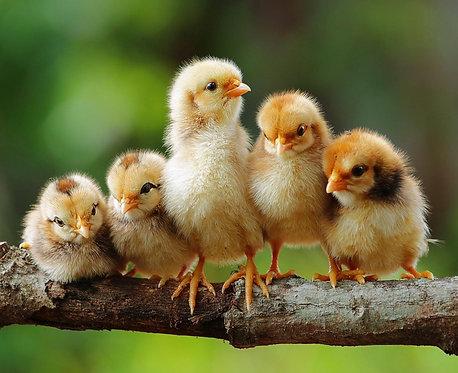 Милые пушистые птенцы на ветке