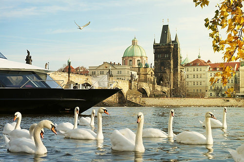 Стая лебедей на фоне Праги. Романтический пейзаж