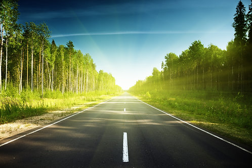 Дорога через лес в России