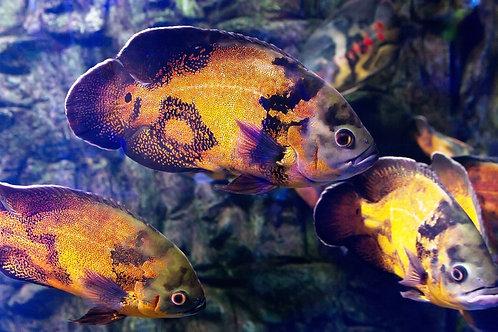 Удивительный подводный мир с тропическими рыбами и кораллами