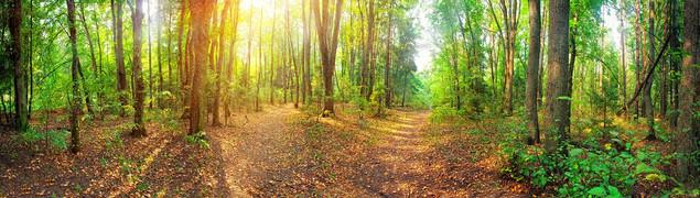 Панорама смешанного леса в летний солнечный день | #71706058