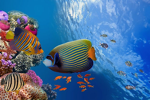 Великолепный подводный мир с тропическими рыбами и кораллами