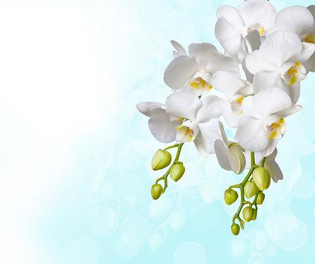 Ветка с белыми цветами орхидеи на голубом фоне
