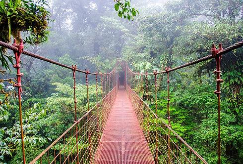 Мост в тропическом лесу Монтеверде - Коста-Рика