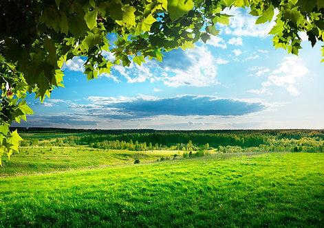 Весенний пейзаж с зеленым полем и лесом