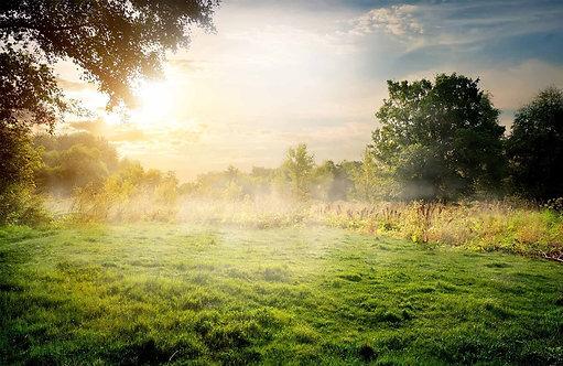 Солнечное летнее утро в лесу с легким туманом