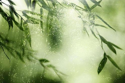 Естественный фон из бамбуковых листьев в лесу