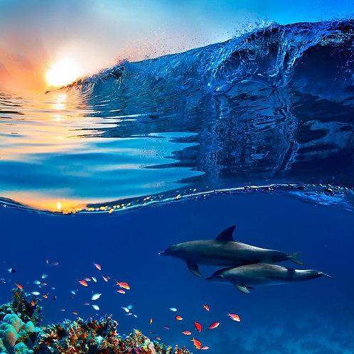 Два красивых дельфина плывут под водой через коралловый риф
