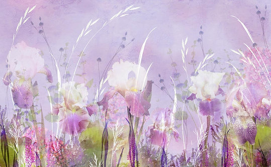 Рисунок акварелью с маками и ирисами в траве в фиолетовых тонах