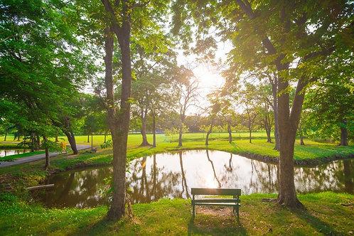 Фотообои. Фрески. Картины. Городской парк. Закат. Природа. Пейзаж. Сады и парки