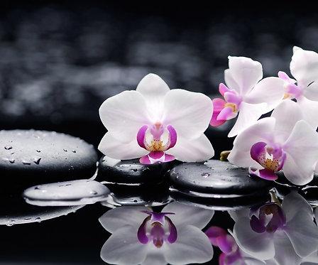 Белые цветы орхидеи на черных камнях с каплями воды
