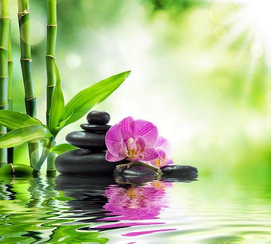Фиолетовая орхидея на черных камнях и стебли бамбука в воде
