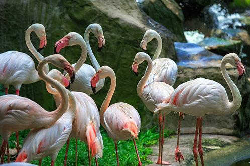 Стая фламинго. Куала-Лумпур, Малайзия