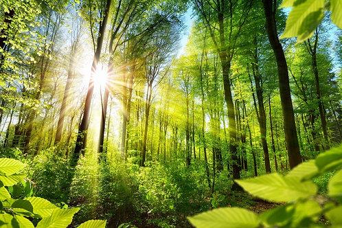 Зеленый лиственный лес под теплыми лучами солнца