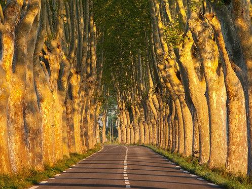 Аллея с деревьями на рассвете в Провансе - Франция