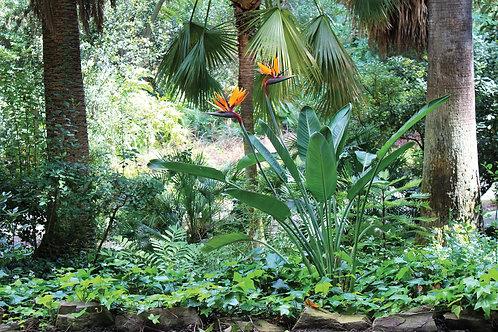 Фотообои. Фрески. Картины. Стрелиция. Цветы. Сады и парки. Природа и пейзажи