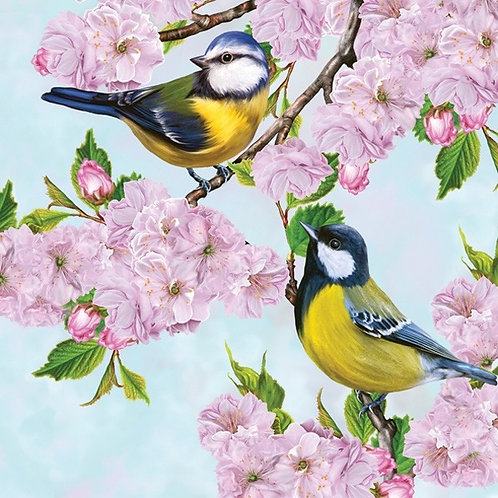 Две маленькие синицы на ветке цветущей сакуры весной