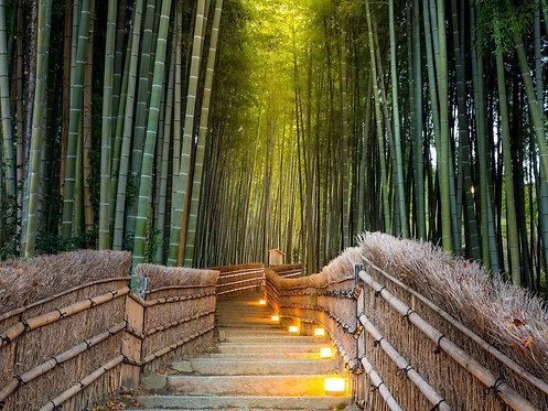 Тропа со ступенями и фонарями в бамбуковом лесу в Арасияма - Япония