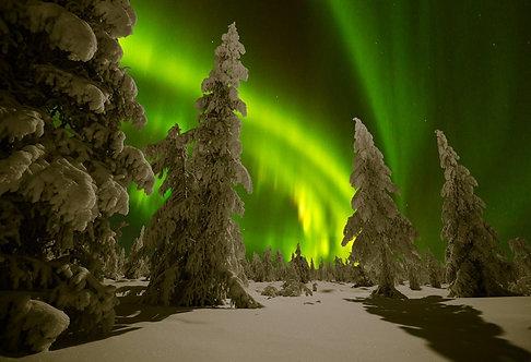 Зимний ночной пейзаж с лесом и полярным северным сиянием в Канаде
