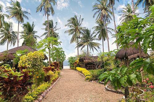 Фотообои. Фрески. Картины. Тропический сад. Природа и пейзажи. Садовая аллея