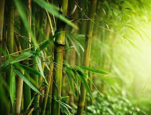 Зеленые заросли бамбукового леса крупным планом