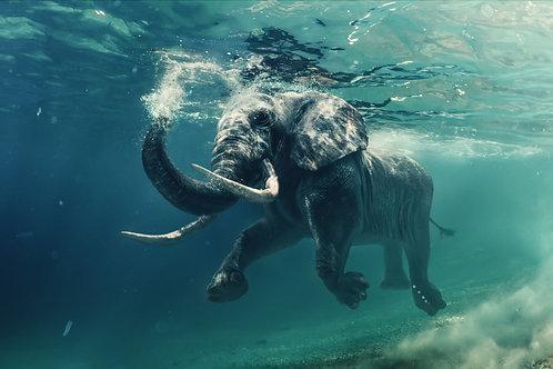 Африканский слон плывет в океане