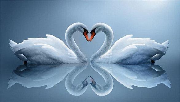 Два белых лебедя склонили шеи в форме любовного сердца