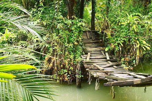 Старый небольшой мост через реку в тропическом лесу