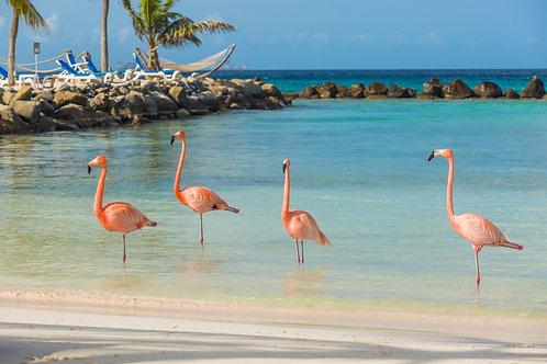 Четыре фламинго на тропическом пляже