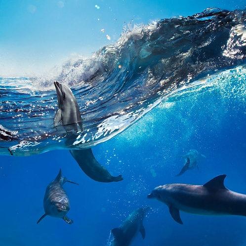 Вид на океан и стаю игривых дельфинов из-под воды